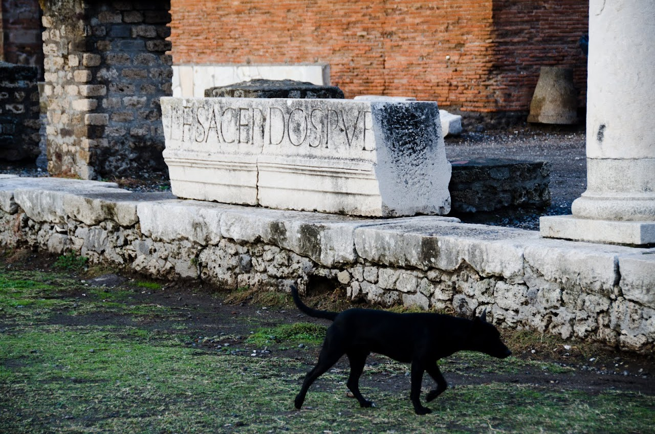 Dog at Pompeii