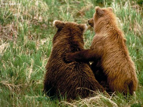 orsetti abbracciati