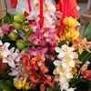 Выставка цветов,