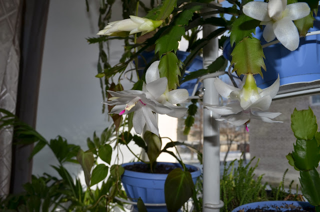 мой райский сад:) - Страница 13 DSC_0534
