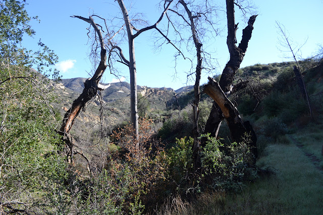 burned trees framing huge rock outcrops in the distance