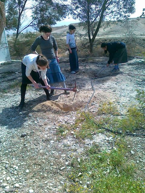 בנות אולפנה שותלות עצים בבית חגלה