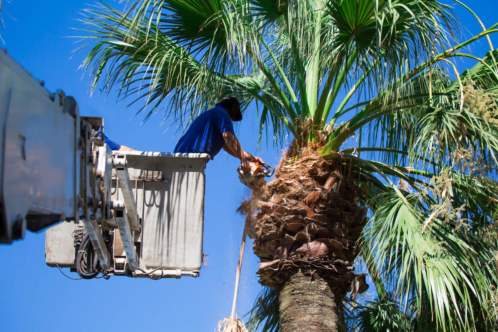 Tree Removal Pasadena