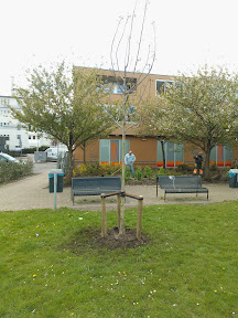 nieuwe walnootboom