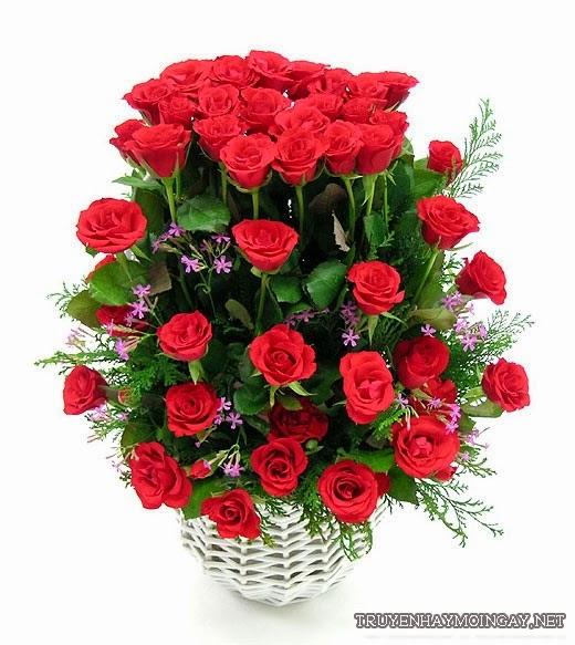 Những lãng hoa hồng đẹp lãng mạn nhất hiện nay