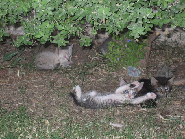 Kittens hanging out under a bush