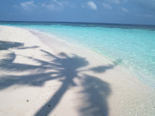 maldives beach palm trees shadow jy142 350a 1600x1200 wallpaper