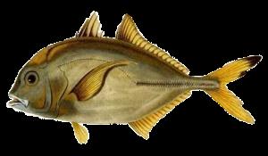 fisk053.png?gl=DK