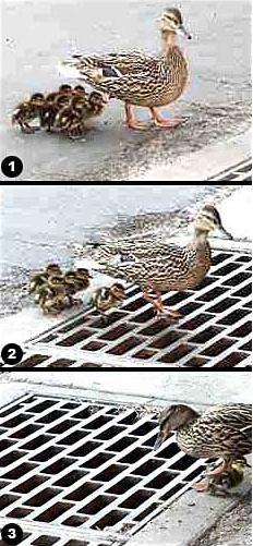 duckgrill.jpg?gl=DK