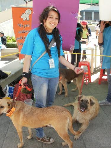 Activista de animales, APLAB, perros callejeros