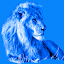 Blue Lion Photos