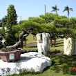 35  takýchto araukaritových krásavcov použitých ako dekorácia aj ako stolíky pod bonsaje bolo do 150 kusov.JPG