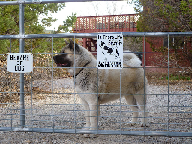 Beware Of Dog No Trespassing And Liability The Nihon Ken - 18 ferocious dogs posing beside their beware of dog signs