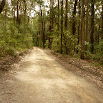 Road to Turpentines campsite in the Watagans (322082)
