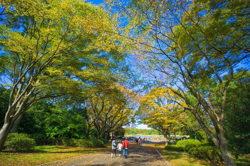 昭和記念公園 紅葉 写真1