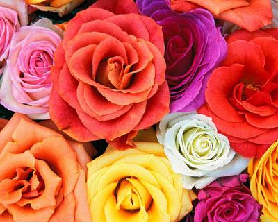Цветы вашей индивидуальности