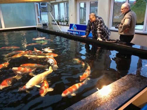 Kangei koi club for Indoor koi pond designs