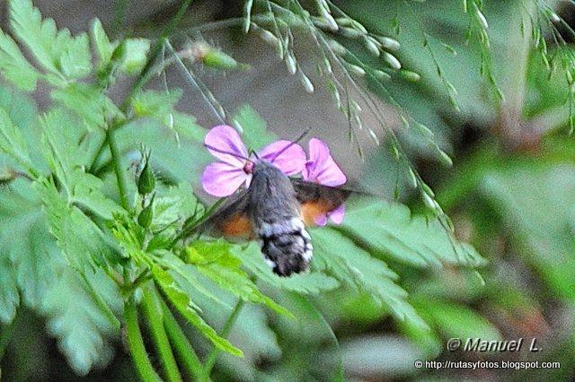 Fauna del Parque Natural de Redes