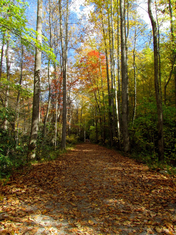 Fall Mountain Path by Doug Hagler