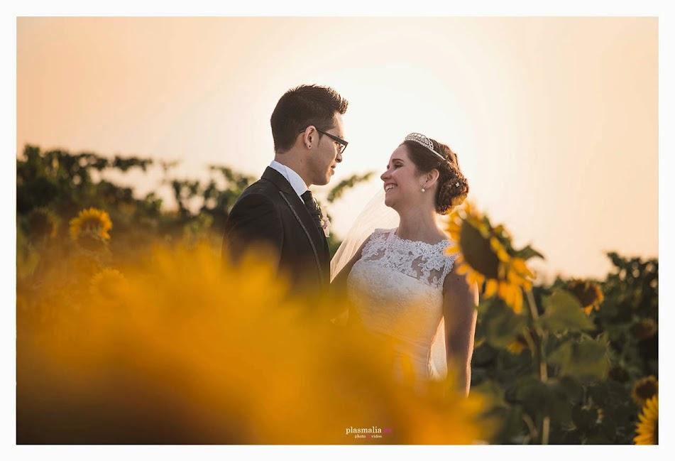 fotografía de boda en un campo de Girasoles de Toledo.