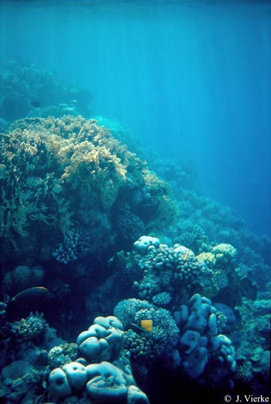 Am Riffabfall, Malediven