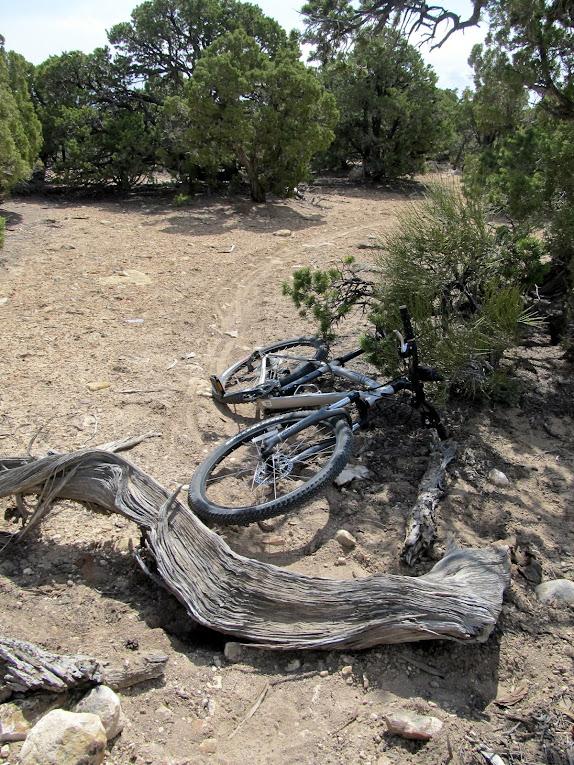 Log blocking the trail