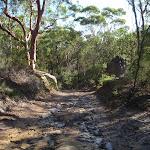 Heading through the bush (115843)