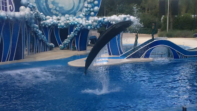 Dolphins at Sea World Orlando