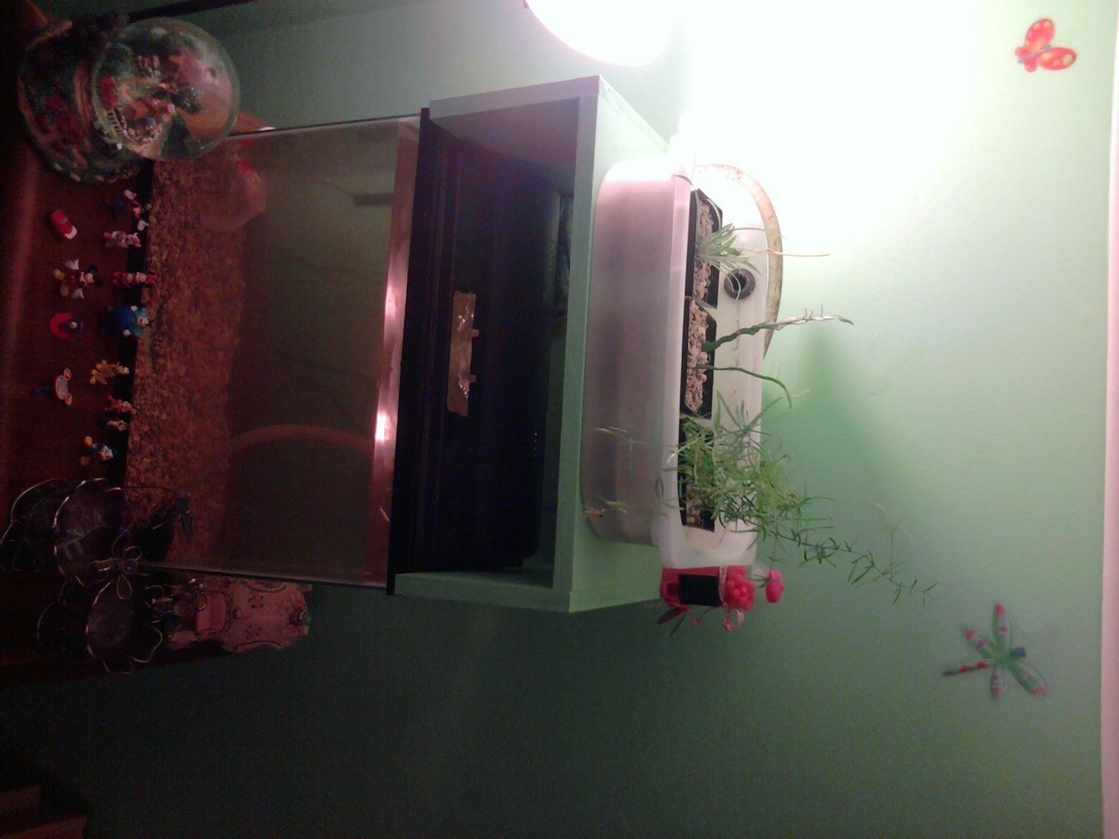 Bella got an aquaponics aquarium in her room
