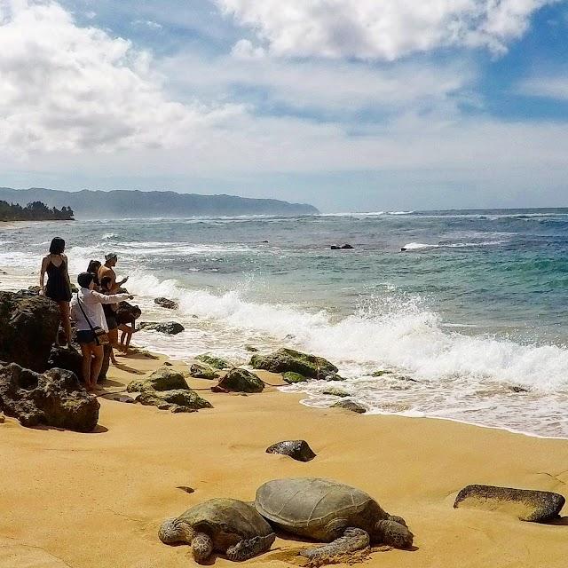 Turtle Beach, Oahu, HI