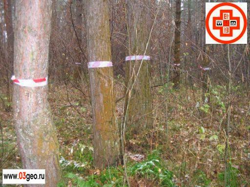Создание дендроплана участка по материалам инвентаризации зеленых насаждений после выполнения топографической подеревной съемки. Картинка с разметкой деревьев перед топосъемкой