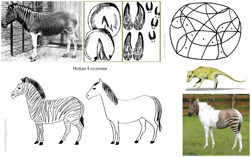 Тематическое занятие для детей по зоологии