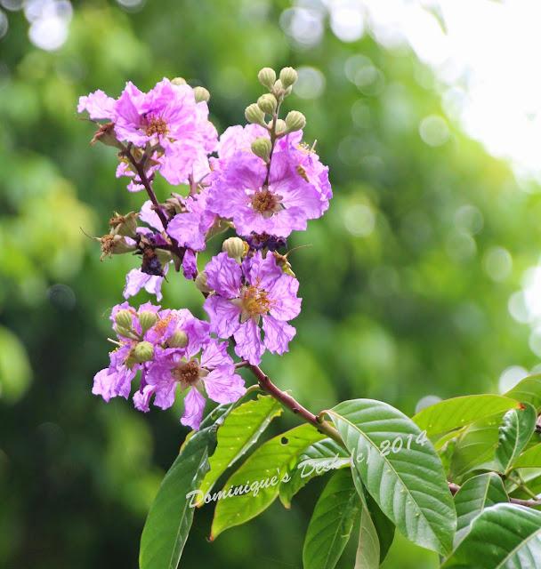 A purple bloom
