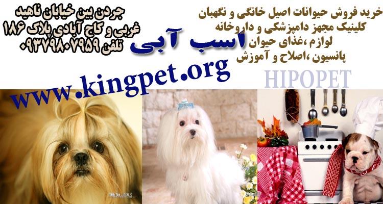 فروش سگ - Google+