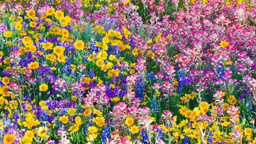 Mixed Spring Wildflowers, Texas.jpg