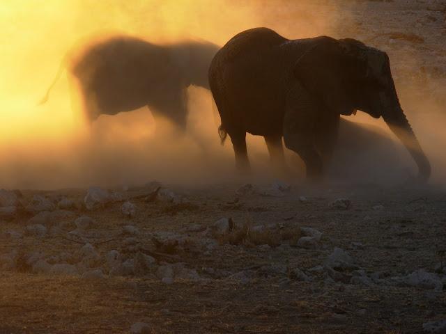 أفضل ما في أفريقيا  Best of Africa Namibia_180807173311