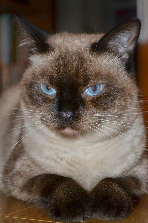 Photos des chats sauvés, avant/après - Page 7 DSC_4129