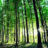 Protege Natureza