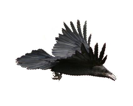 Imagem do corvo selecionada