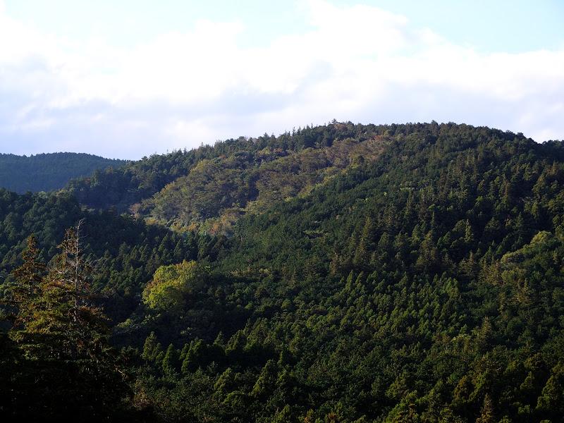 metsävuoret