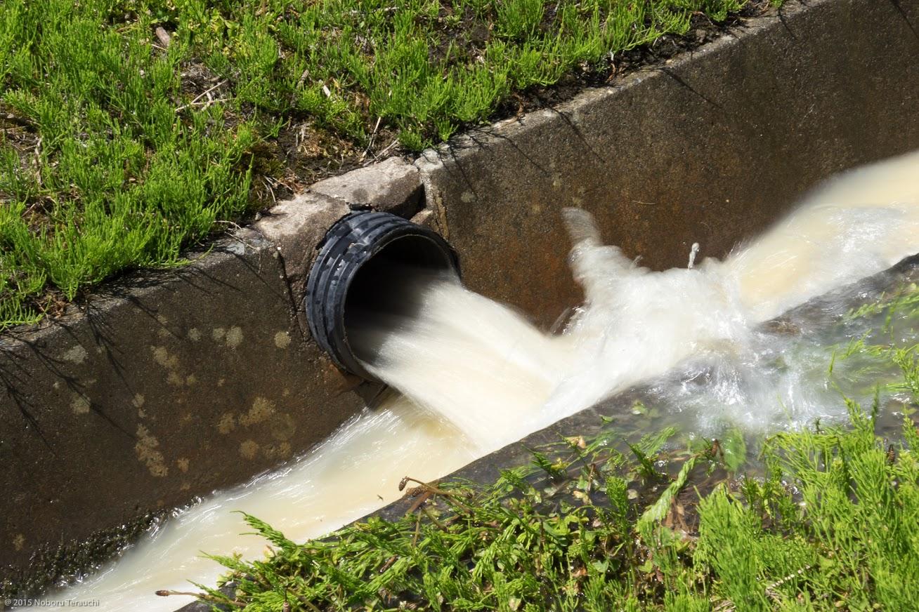 排水路に流れ込む田んぼの水