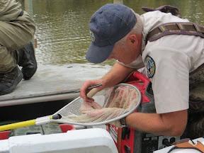 Paul Winkle examines S. Platte fish.