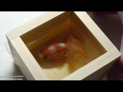 الاسماك الذهبيه ابداعات الفنون اليابانيه Riusuke Fukahori