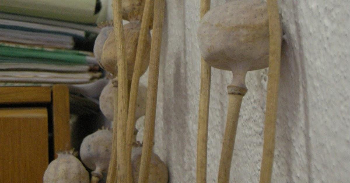 les graines de pavots en r publique tch que pour une petite faim. Black Bedroom Furniture Sets. Home Design Ideas