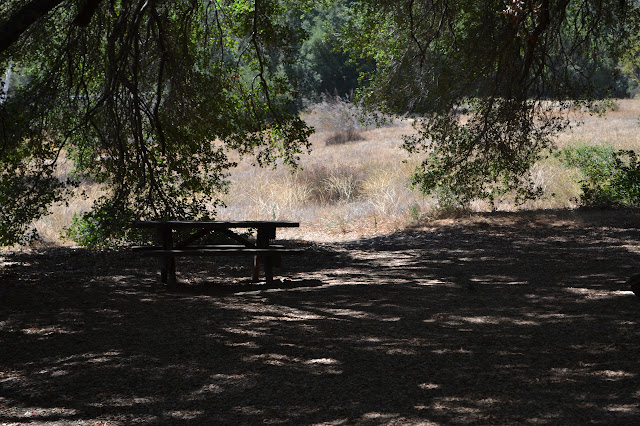 picnic table in the shade