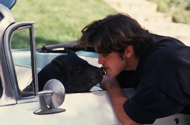 George Clooney feeding his pig Max grapes