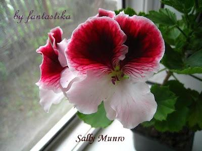 Красота без границ - Страница 9 Sally%2520Munro%2520