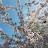 Jae Shim avatar image