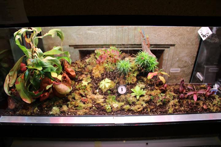 le forum carnivore afficher le sujet nouveau terrarium. Black Bedroom Furniture Sets. Home Design Ideas