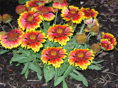 A guide to northeastern gardening best long blooming perennials what are your favorites for Perennial garden design zone 7
